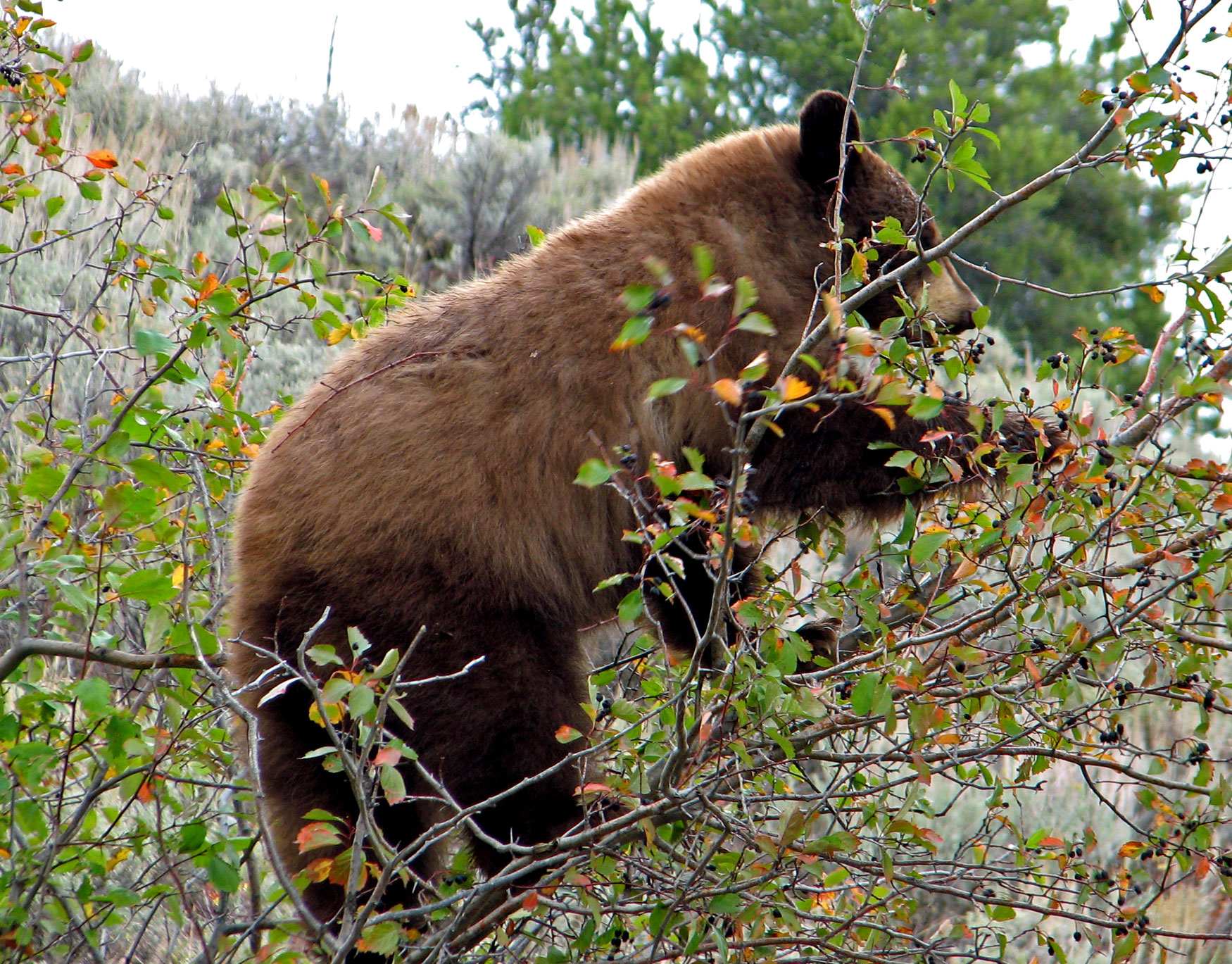 Bear Brochures Bear Photo